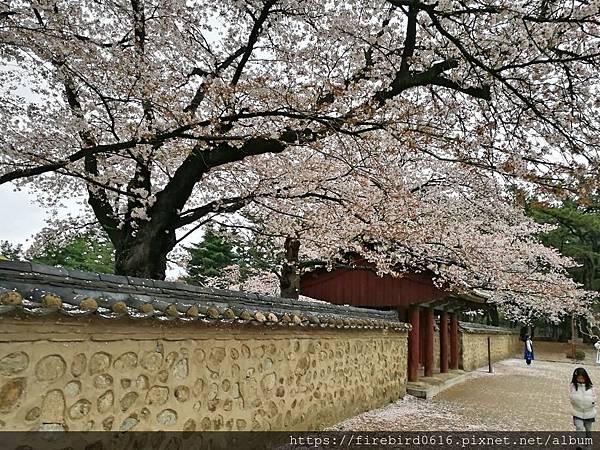 2韓國慶州自由行--市區古蹟52.jpg