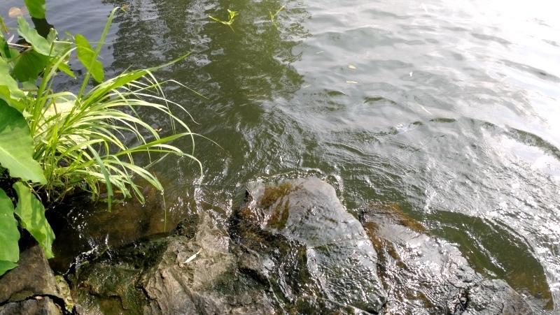 3杭州自由行-西湖-95.jpg