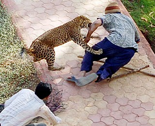 leopard3nr.jpg