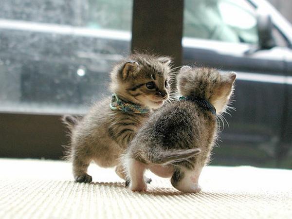 kittensplay from weheartit.jpg