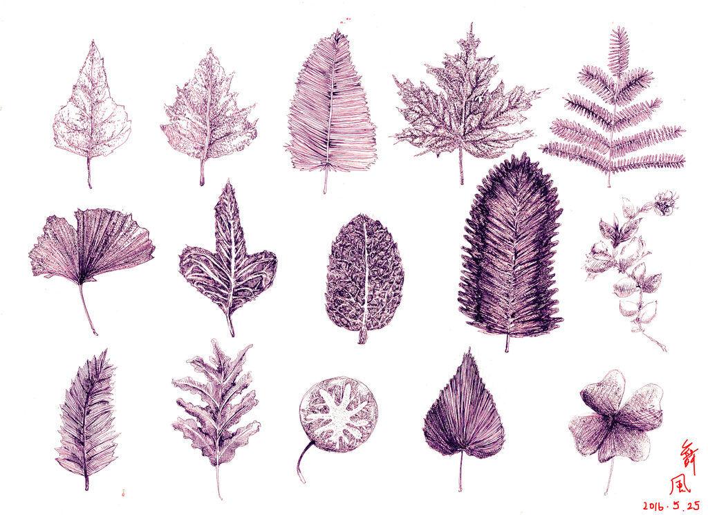 葉子leaves.jpg