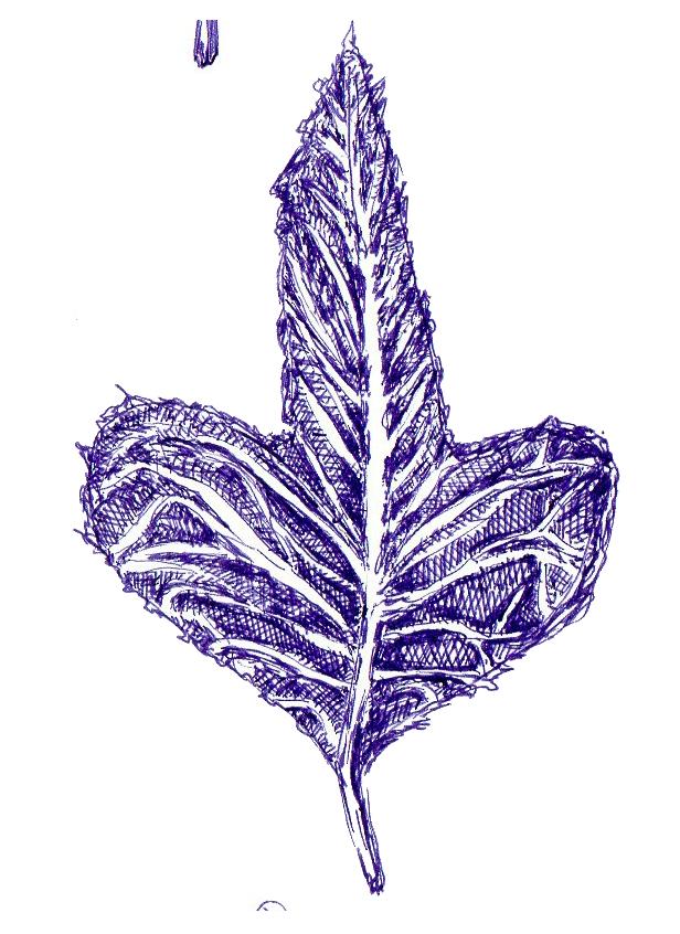 leaf3.png