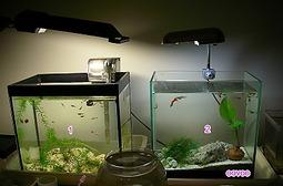 魚缸A.jpg