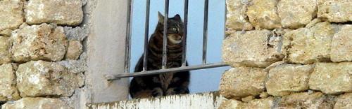 法國貓1.jpg