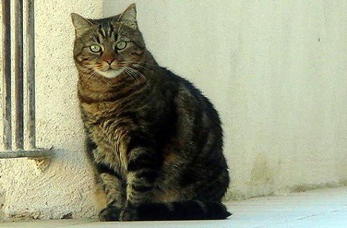 法國貓2.jpg