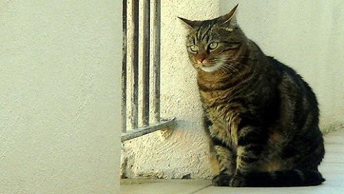 法國貓3.jpg