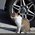 車底下的貓
