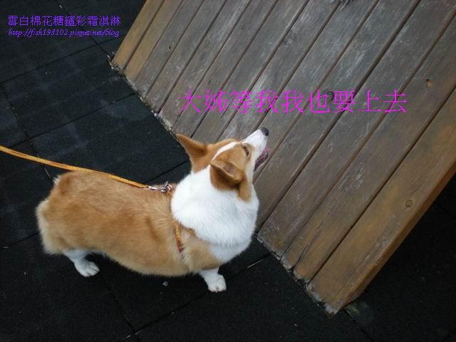 080520花東之旅 (65).jpg