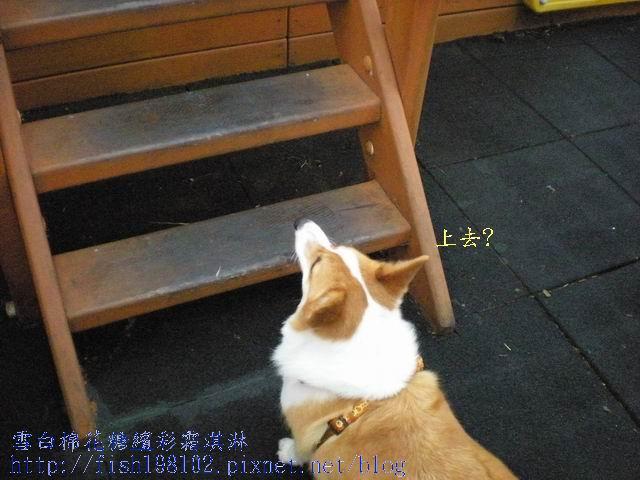 080520花東之旅 (70).jpg
