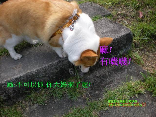 080520花東之旅 (132).jpg