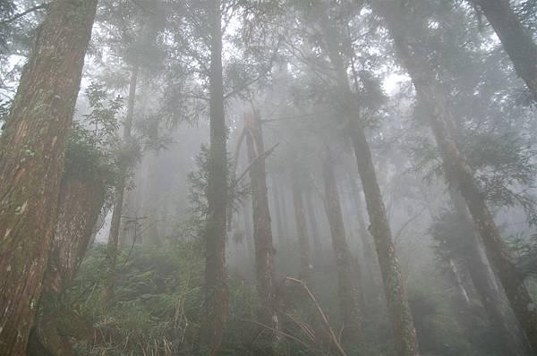 迷霧太平山 (16)煙霧迷漫的森林.JPG