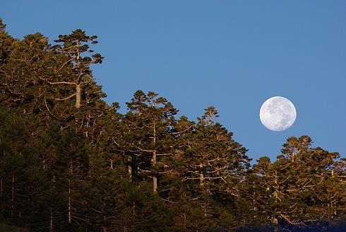 合歡山~奇萊登山口 (7)清晨清淅的月亮.JPG