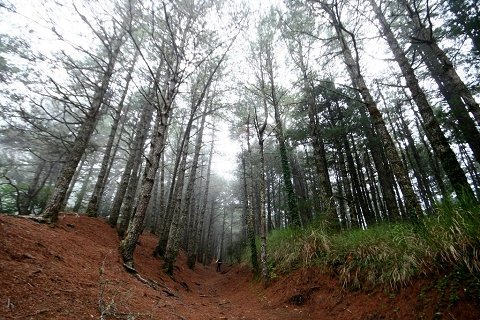 南湖大山‧殘念 (26)松針林道~霧來了.jpg