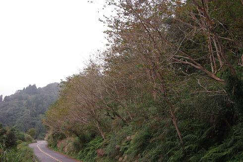 太平山 (6).JPG