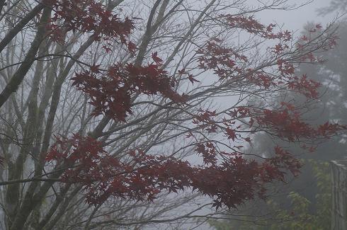 太平山 (12)深秋楓紅.JPG