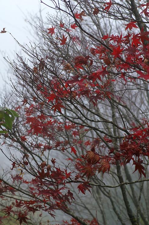 太平山 (15)深秋楓紅.JPG