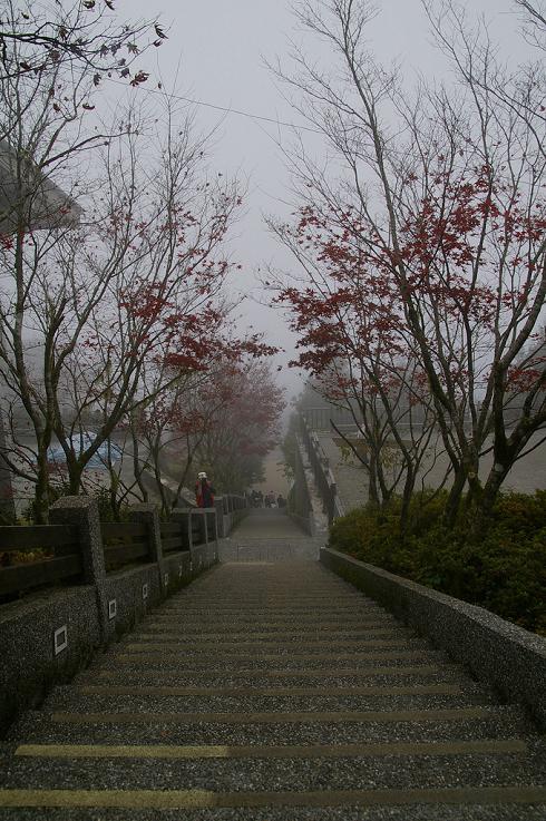 太平山 (16)深秋楓紅.JPG