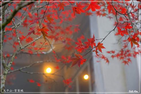 太平山 (17)封面.jpg