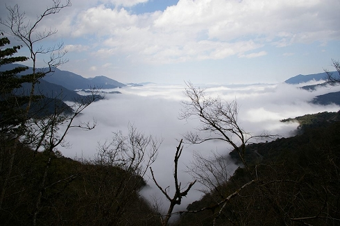 武陵賞櫻 (32)雲海.jpg