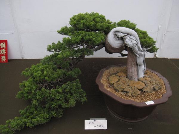 2009亞太盆景賞石展覽