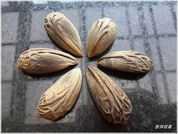 欄棕櫚種子