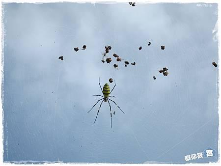 真的是蜘蛛!!