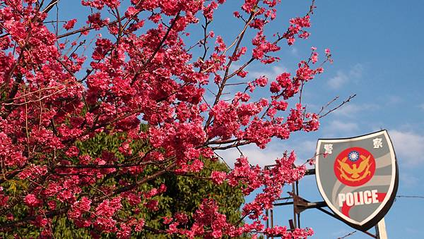 台中賞花景點哪裡去,最熱門的台中賞花景點告訴你!