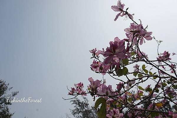 16-04-03-00-25-47-209_deco