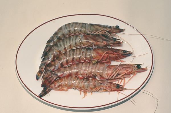 斑節蝦.JPG