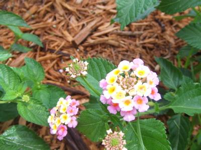 路邊我看到美麗的花
