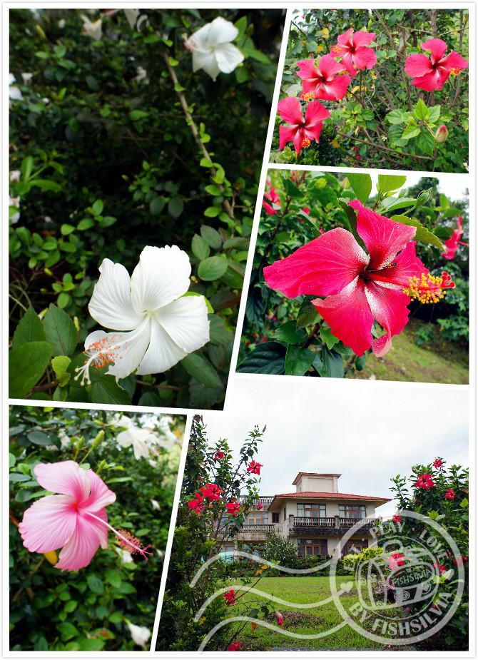 隱山靚海 花園