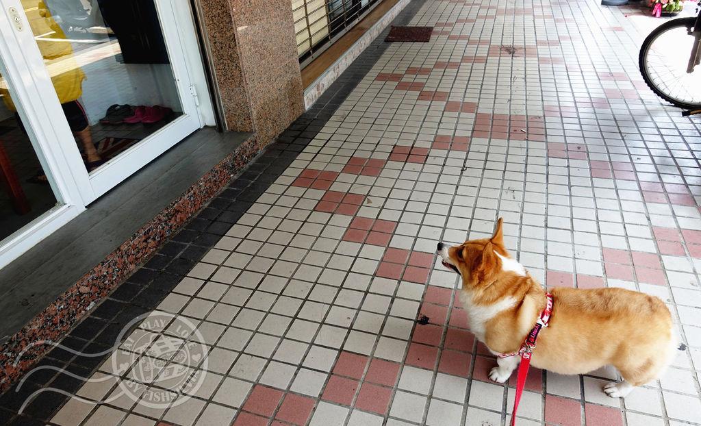 柯基,好時光,寵物旅館,台北內湖,狗狗住宿,狗狗安親,寵物美容,寵物住宿,寵物安親,寵物監視器