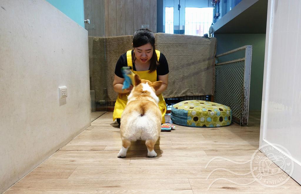 寵物旅館01_副本21.jpg