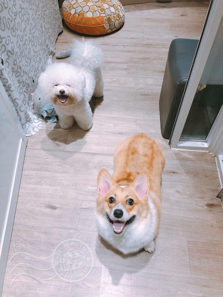 寵物旅館01_副本29.jpg