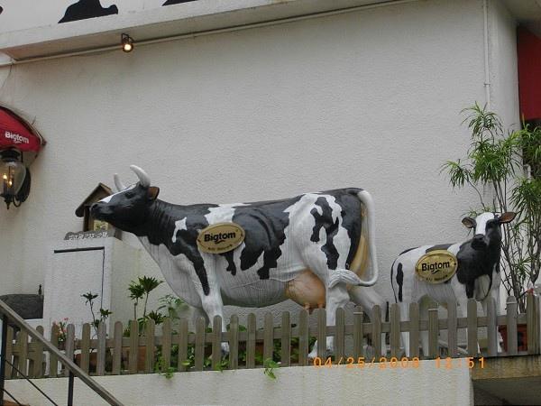 乳牛我的愛