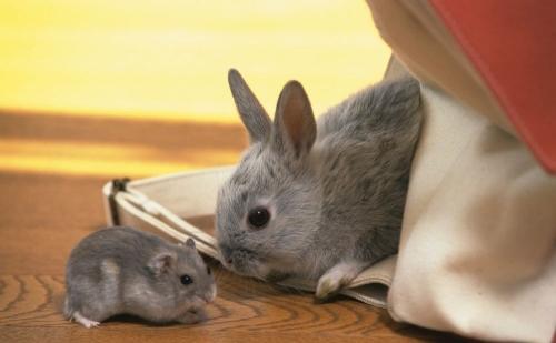 兔年行大運!!