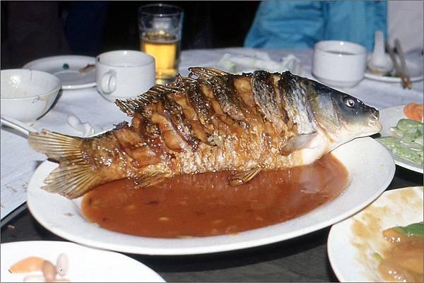 嘴巴一張一合的活鯉魚1995.10.6.jpg