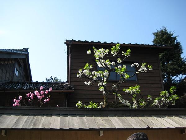 2009kanazawa 047.jpg