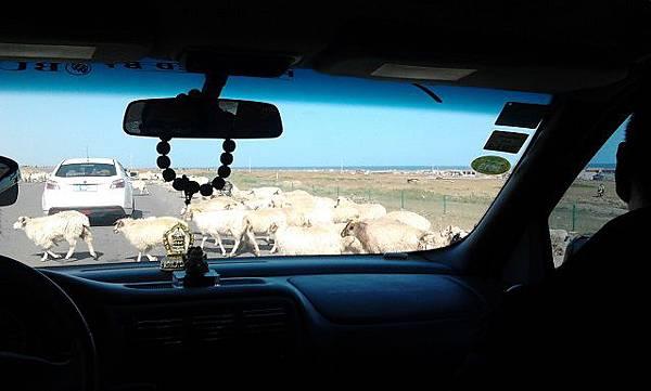 3.跑到路上的羊群