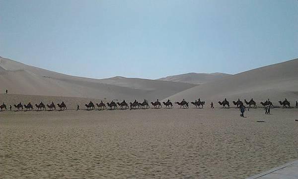 4.景區內的駱駝