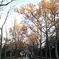 1.明孝陵神道.jpg