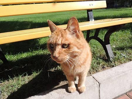 圖11校園裡的貓