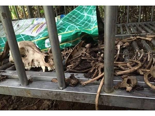 圖一 屍骨散落的養殖場.jpg