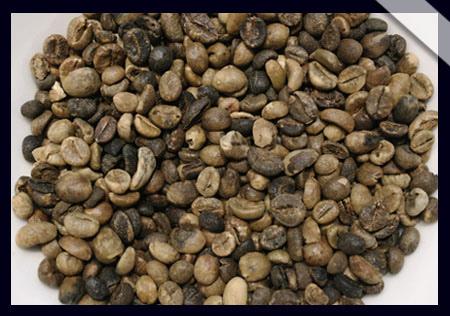 羅布斯塔咖啡豆.jpg