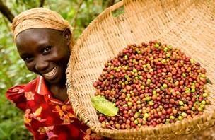 種植咖啡的農民.jpg