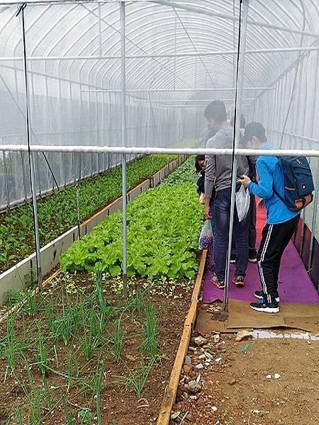 (圖六)溫室前的忌避植物