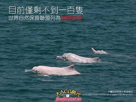 白海豚05.jpg