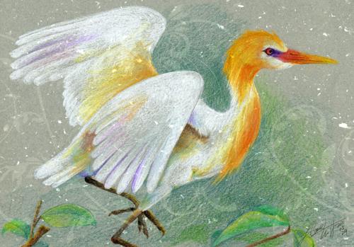 黃頭鷺.jpg