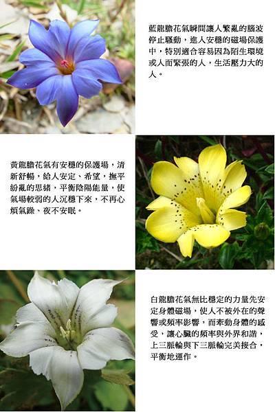 花的靈性智慧-1