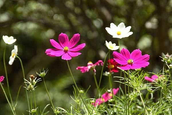 flower-1365418 (3)